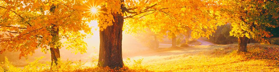 autumn-footer